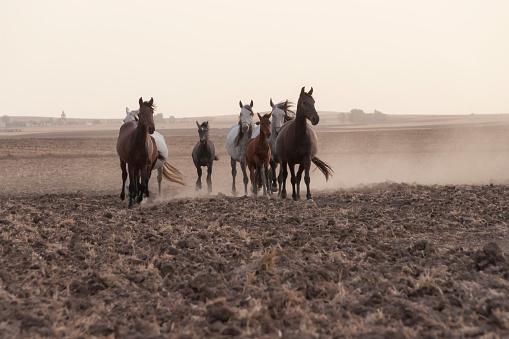 horses riding freely 1188428191