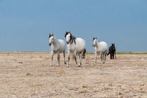 horses riding freely 1188428196