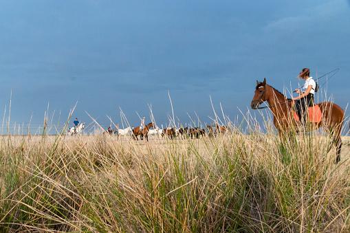 horses riding freely 1188428197