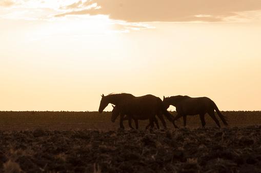 horses riding freely 1188428200
