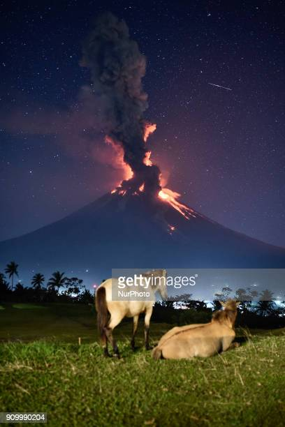 Horses roam a field as Mount Mayon erupts early morning in Camalig Albay province Philippines January 23 2018 Mount Mayon the Philipines' most active...