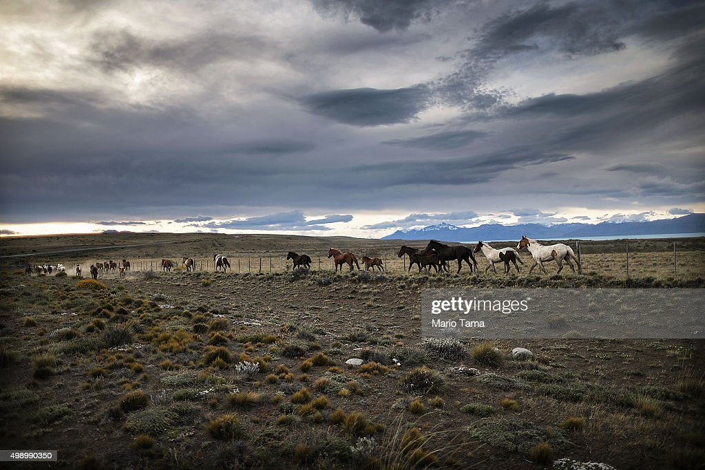 Horses run outside Los Glaciares National Park, part of the Southern Patagonian Ice Field, the third largest ice field in the world, on November 26, 2015 in Santa Cruz Province, Argentina. The majority of the almost 50 large glaciers in Los Glacieres National Park have been retreating during the past fifty years due to warming temperatures, according to the European Space Agency (ESA). The United States Geological Survey (USGS) reports that over 68 percent of the world's freshwater supplies are locked in ice caps and glaciers. The United Nations climate change conference begins November 30 in Paris.