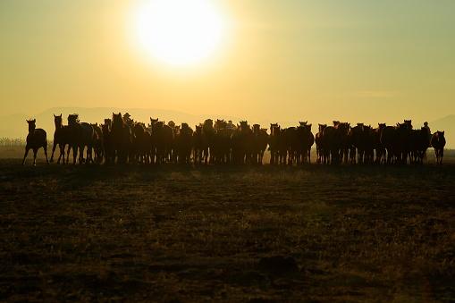 Horses running freely at sunset. 1196716091