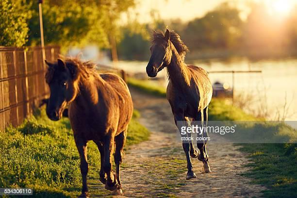 Pferde Laufen in Natur