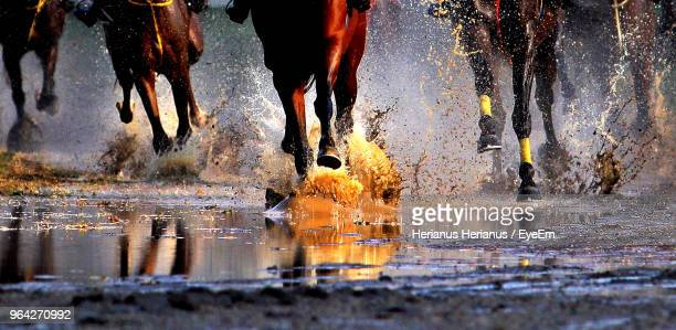 horses running in puddle - horse racing stock pictures, royalty-free photos & images