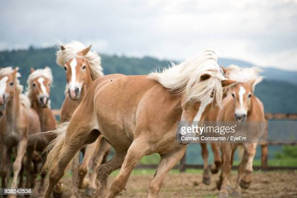horses running on field against cloudy sky - herbivorous stock photos and pictures