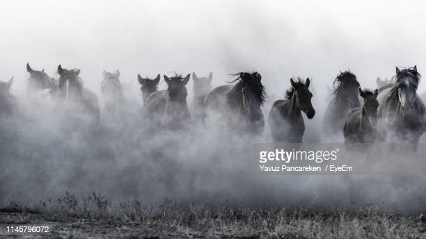 horses running on grassy field during foggy weather - mandria foto e immagini stock