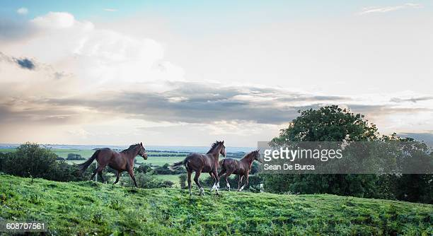 horses running on green landscape - horse stock pictures, royalty-free photos & images
