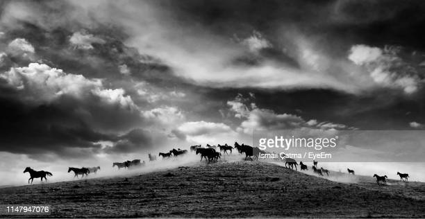 horses running on land against sky - animals in the wild stock pictures, royalty-free photos & images