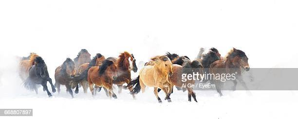 horses running on snow covered field - horses running stock pictures, royalty-free photos & images