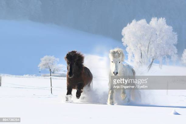 horses running on snow field against sky during winter - equestrian animal stock pictures, royalty-free photos & images