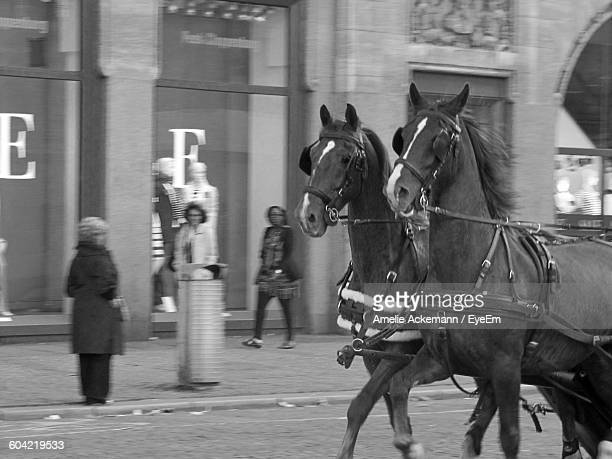 Horses Running On Street By Building