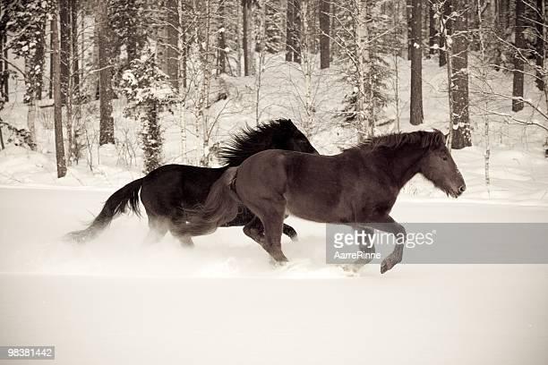 Horses running through snow