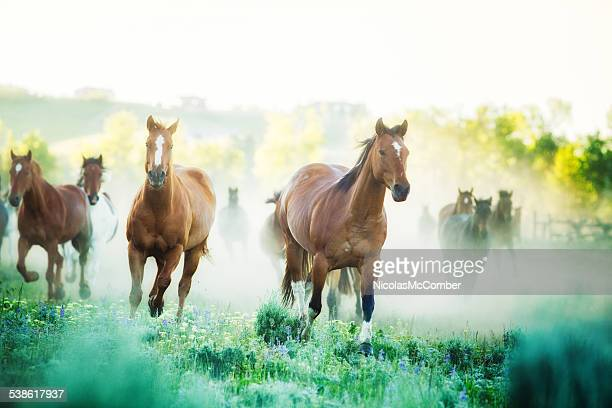 Horses running to pastures foggy Summer morning Montana ranch