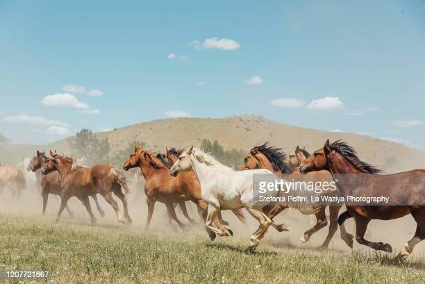 horses running wild and free on the greasy grass. - ranch stock pictures, royalty-free photos & images