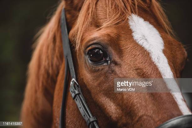 horses see right through you - tame stock pictures, royalty-free photos & images