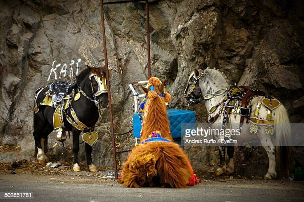 horses standing against rocky wall - andres ruffo stock photos and pictures
