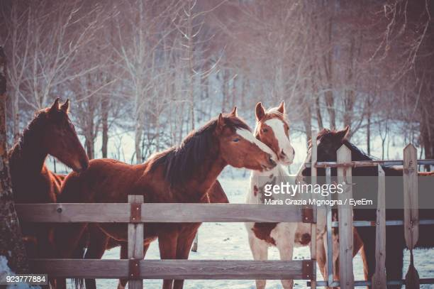 Horses Standing At Farm Against Bare Trees
