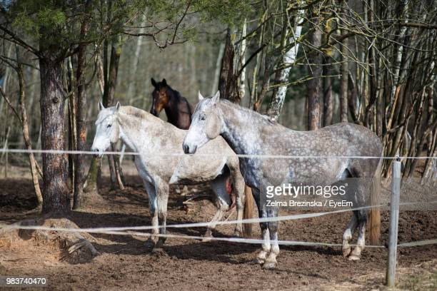 Horses Standing By Bare Trees