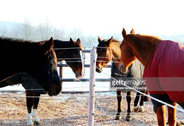 Horses Standing By Fence On Field Against Sky