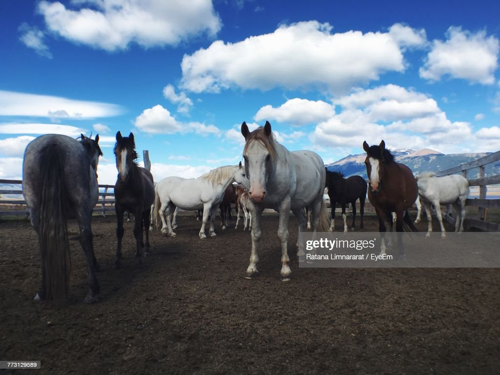 Horses Standing On Field Against Cloudy Sky : Photo