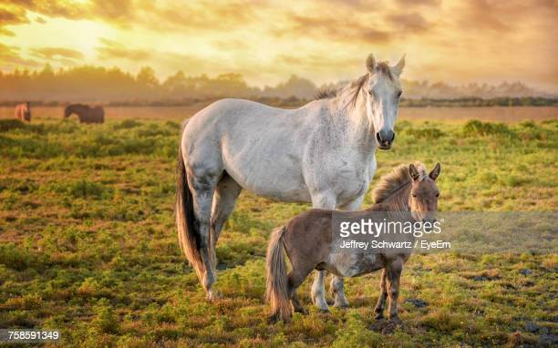 Horses Standing On Field Against Dramatic Sky