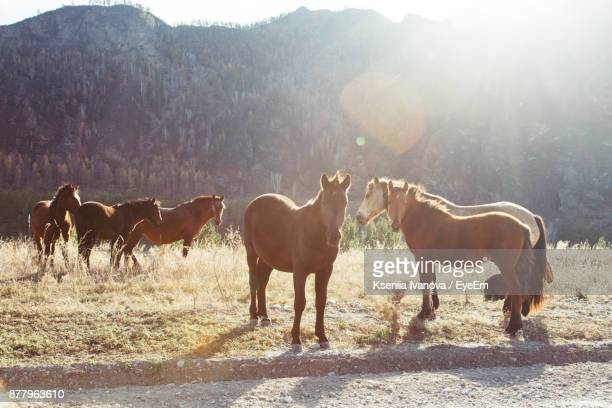Horses Standing On Field Against Mountain During Sunny Day