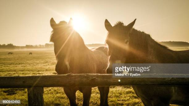 Horses Standing On Field Against Sky