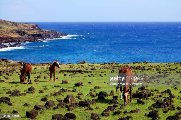 Horses Standing On Field By Sea Against Clear Sky