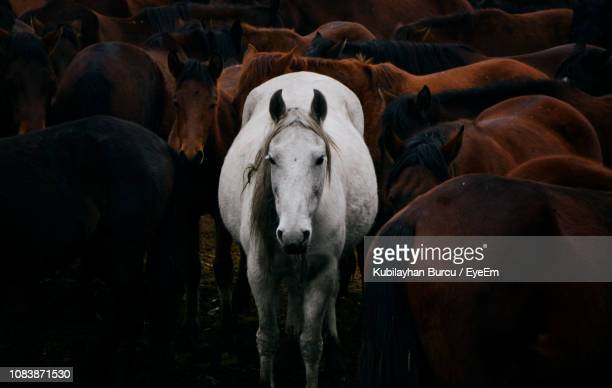 horses standing on field - equestrian animal photos et images de collection