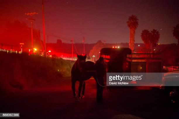Horses that survived the Lilac Fire in their stalls are loaded onto a trailer in the early morning hours of December 8 2017 near Bonsall California...