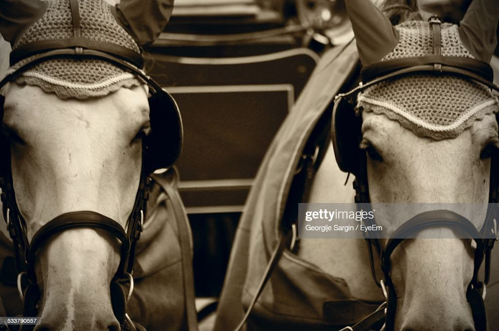 Horses Tied To Cart : Foto stock