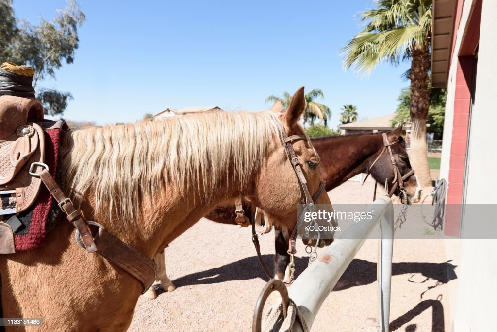 Horses Tied To Hitching Post Stock Photo - Getty Images