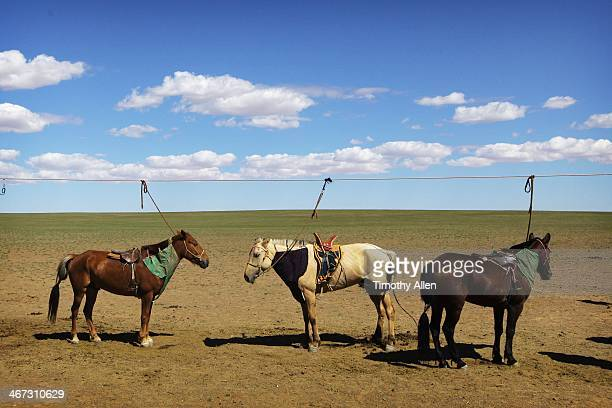 horses tied up under clouds in the gobi desert - omnogov stock pictures, royalty-free photos & images