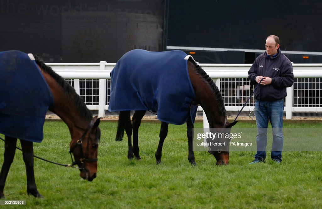Horses trained by Gordon Elliot enjoy a pick of grass after an early morning exercise session during Champion Day of the 2017 Cheltenham Festival at Cheltenham Racecourse.