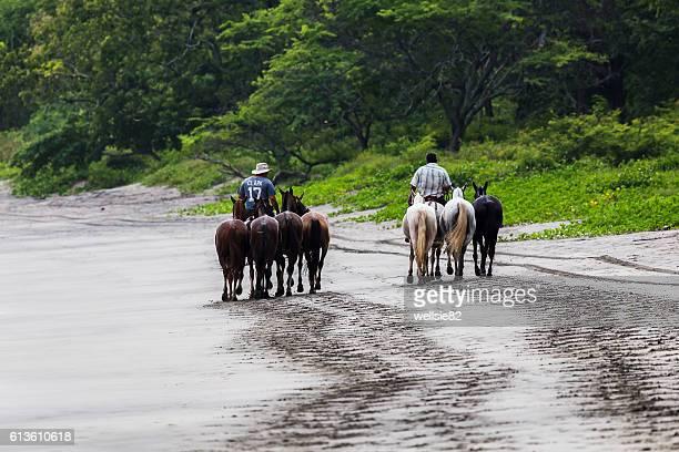 horses trot along the beach - península de nicoya fotografías e imágenes de stock