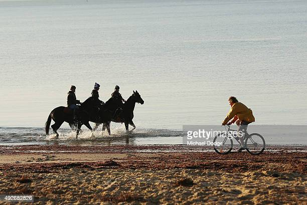 Horses walk through the water as a local bike rider goes by at Balnarring Beach on October 15 2015 in Melbourne Australia Balnarring Beach is a...