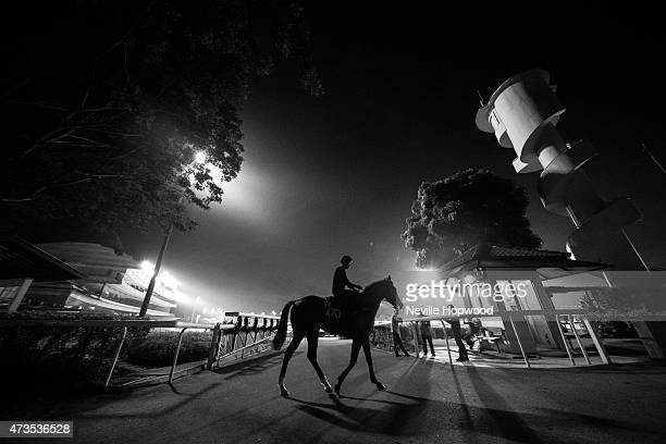 Horses walk to the track at Kranji Race course on May 16, 2015 in Singapore.