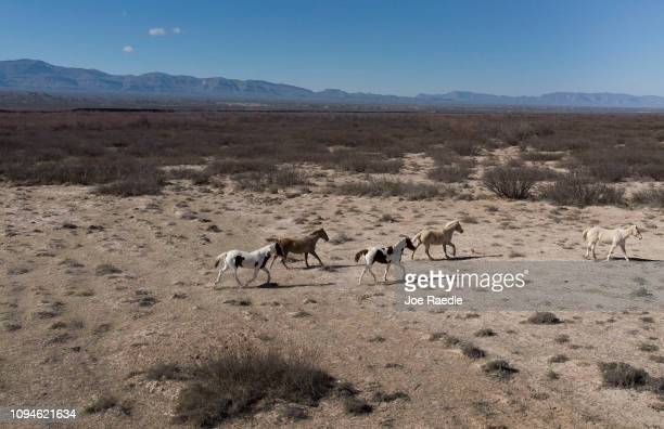 Horses walk together on a ranch as the border wall is seen on the horizon in the background on January 15 2019 in Esperanza Texas The US government...