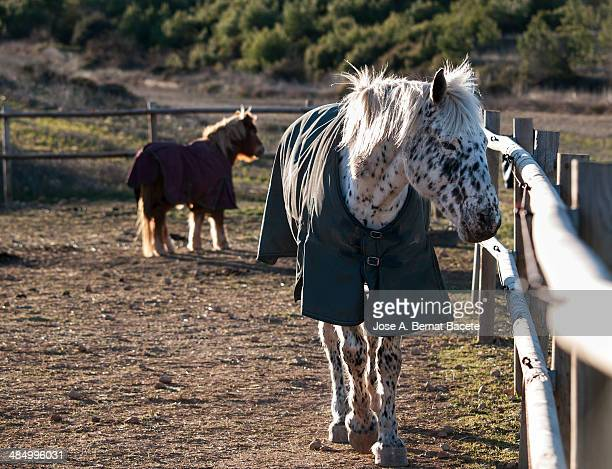 Horses warm with blankets in winter