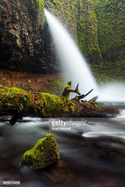horsetail creek plummets over ponytail falls and moss covered boulders, columbia river gorge nationa - brook mitchell fotografías e imágenes de stock
