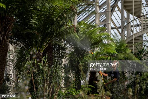 Horticulturalist Emma Love waters plants inside the newly renovated Temperate House as it reopens to the public at Kew Gardens on May 3 2018 in...