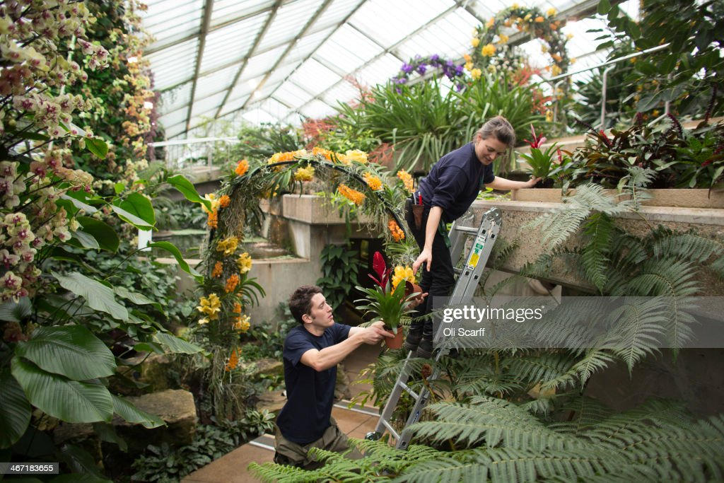 Orchid Festival At Kew Gardens : News Photo