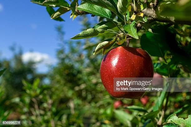 Horticulture - Apple Orchard