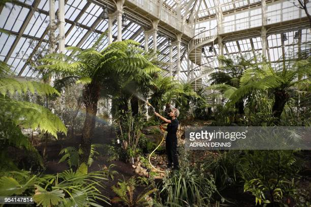 TOPSHOT A horticulturist waters plants the Temperate House at Kew Gardens in west London on May 3 2018 A gleaming monument to the ambition and...