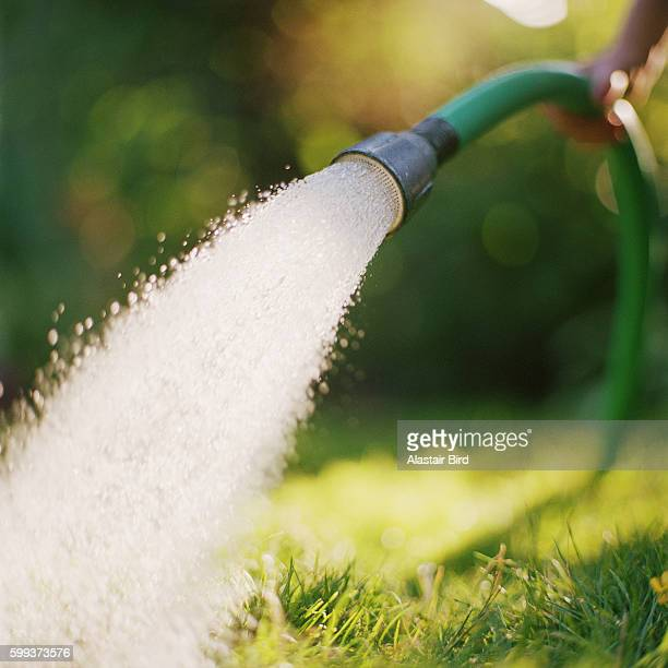 hose pipe spraying water in the garden - hose stock pictures, royalty-free photos & images