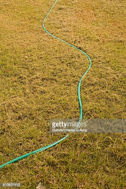 Hosepipe on lawn