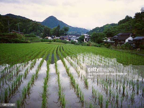 Hoshuyama-mura paddy field