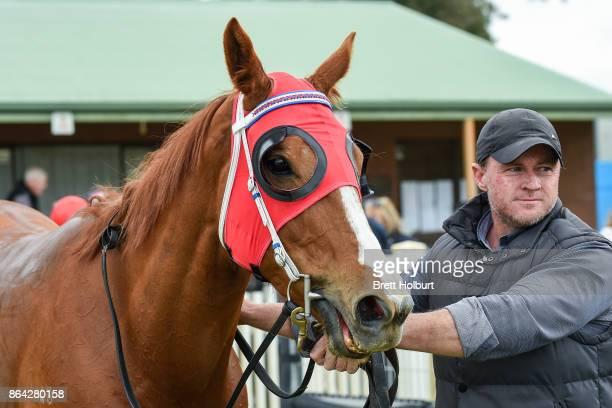 Hospeda after winning Ballarat Conveyancing BM58 Handicap at Avoca Racecourse on October 21 2017 in Avoca Australia