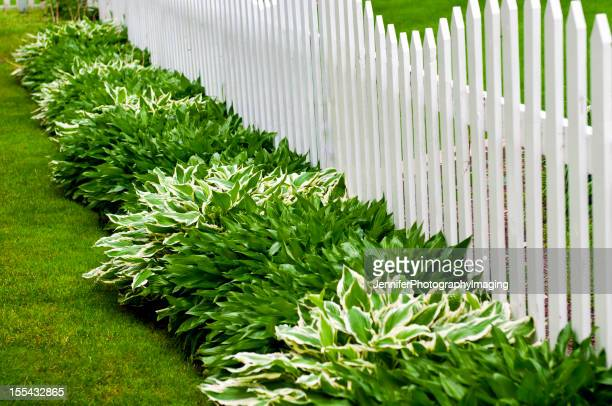 Hosta and Picket Fence